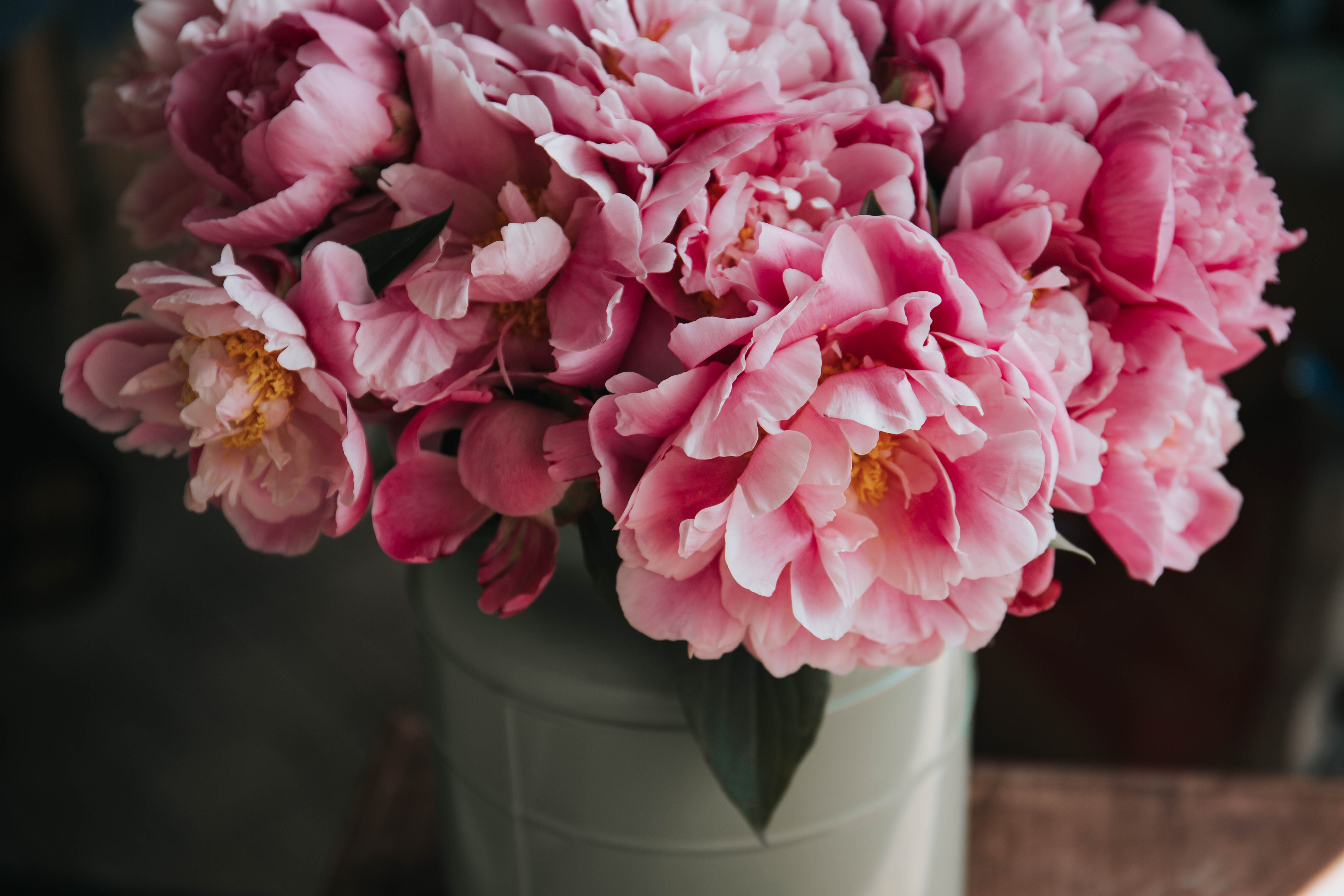 Member Spotlight: Claire McGee from Buds Cutting Gardens